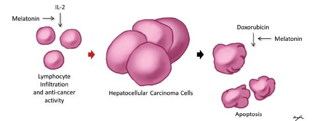 A HMGA1 meghatározó szerepe a petefészekrák őssejtek önmegújulásában és gyógyszer-rezisztenciájában