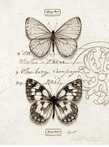 pillangó ayscha vagy zeugma)