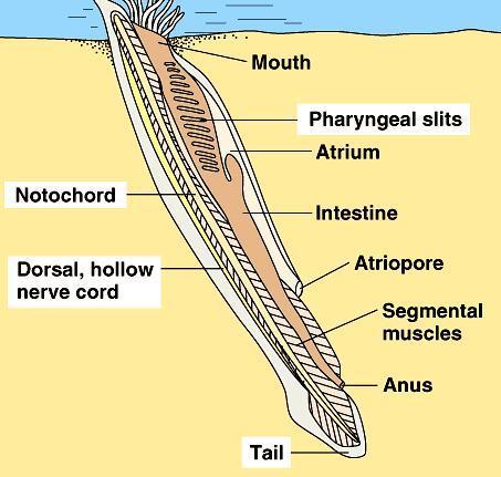Biológiai platyhelminthes