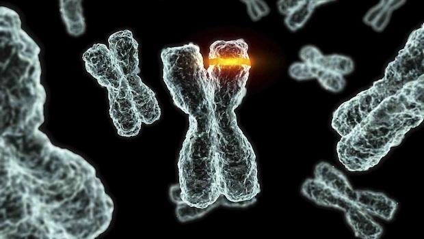 rák genetikai mutációi emberekben