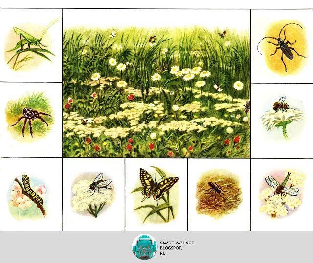 Szovjet rovarok)