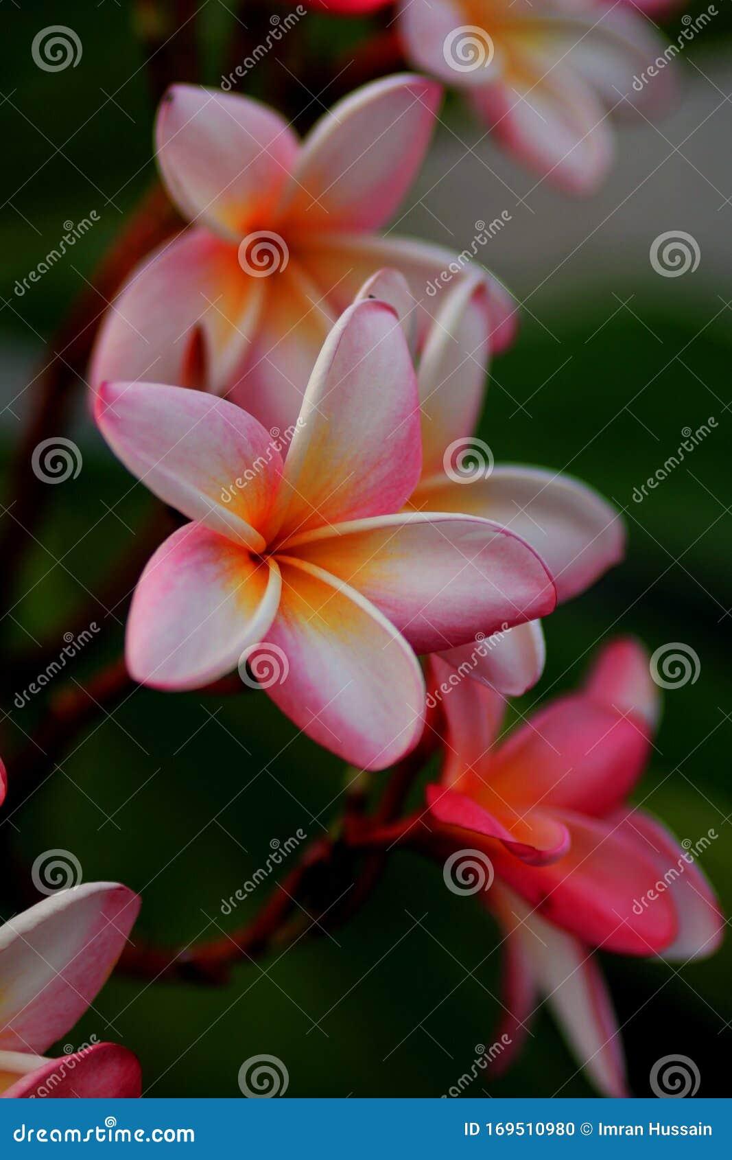 galamb, galamblevegő, természet, levél növényen, növény, fa, kert