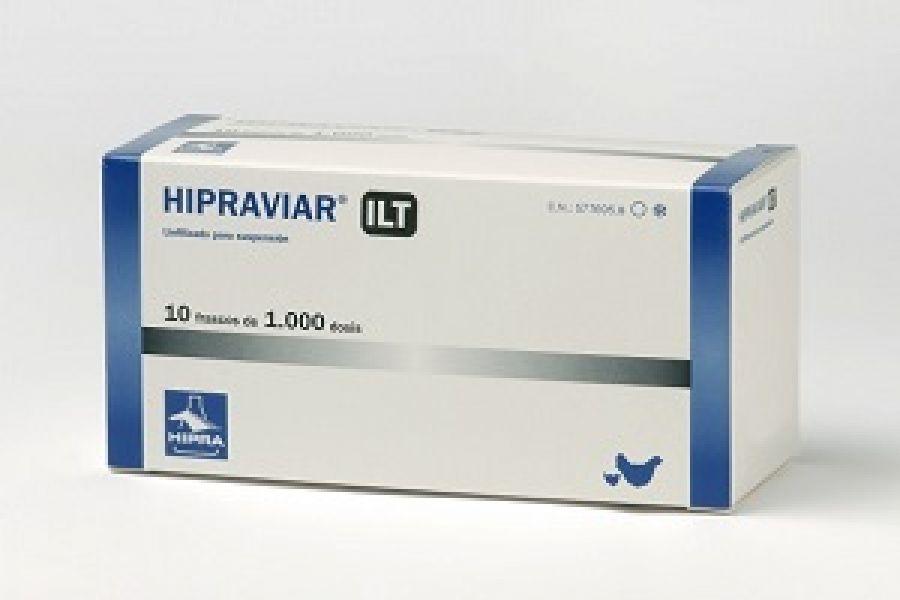 madárfertőző bronchitis kezelése)