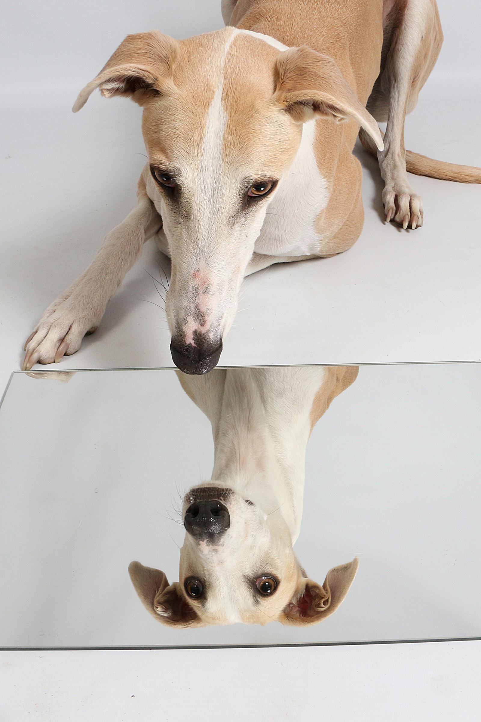 kutyát figyelt)