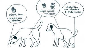 giardia hond op mens)
