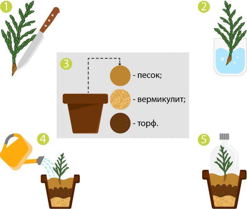 Burgonyabogár elleni biológiai védekezés - Agrofórum Online