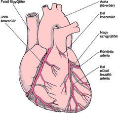 a szívbetegségek kezelése)
