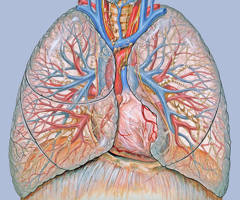 Az onkológiai prognózis - a gyógyulás esélyei