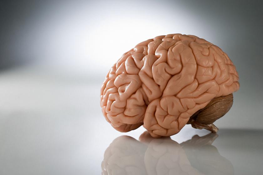 Mi okozhatja az agy parazitáit?