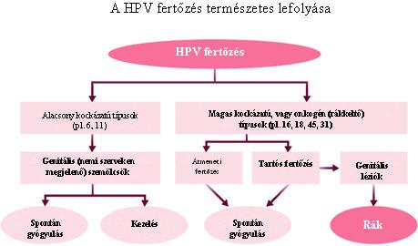 hpv magas kockázatú törzs 16)